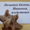 """Открытие выставки """"Итоги палеоэкспедиции-2007"""". Позвонок бизона"""