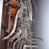 Палеонтологическая экскурсия, ноябрь 2005 года. Рога