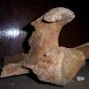 Палеонтологическая экскурсия, ноябрь 2005 года. Кости пещерного медведя