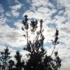"""Поход """"В гости к уральским дольменам"""", ноябрь 2008 года. Верхушки"""