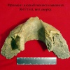 Находки палеонтологической экспедиции 2006 года