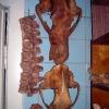 Палеонтологическая экскурсия, ноябрь 2005 года. Скелет пещерного медведя
