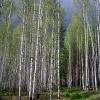 Старательское дело - золотодобыча, май 2005 года. Дорога в лесу