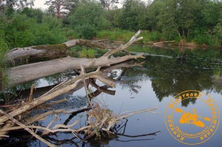 Сплав по реке Серга, июль 2004 года. Скелеты деревьев