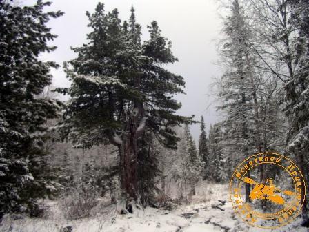 Поход на Конжаковский Камень с коллективом завода ОЦМ, ноябрь 2007 года. У поляны художников