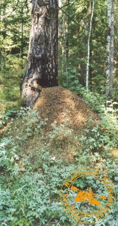 Поход к Каменным Стражам. Гигант-муравейник